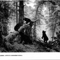 «Знакомство детей с картиной И. И. Шишкина «Утро в сосновом лесу». Открытое занятие по развитию речи в старшей группе