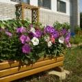 Дизайн-проект оформления огорода в детском саду.