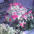Там, где вырождаются цветы, не может жить человек. (Гегель Г. Ф.)