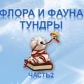Презентация по краеведению «Птицы тундры»