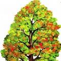 Занятие по познавательному развитию для старшего дошкольного возраста с элементами ТРИЗ «Деревья»