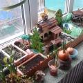 За окном зима, а на подоконнике лето! Конкурс огородов на подоконнике