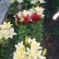 Цветики у меня в садочке.