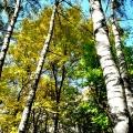 И вот уже в который раз приходит осень, То буйством красок, то дождями напролет.