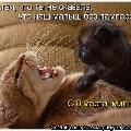 Мартовские коты и 8 Марта!