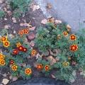 Цветы осенью.