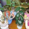 Роль ознакомления с природой в воспитании и образовании дошкольников