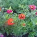 Цветы— это подарок людям от природы.