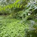 Изумрудный оазис в полупустыне. Экскурсия в дендрологический сад Волгоградской области