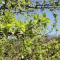 Фотоотчёт «Весна».