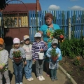 Высаживаем рассаду цветов