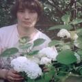 Рассуждение на тему мое хобби «Мой цветущий сад»