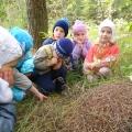 Экскурсия в лес «Где ты, Осень?»