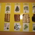 Методическая разработка по экологии для старшей группы «Знакомство с лесом»