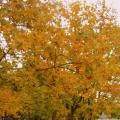 Осенние стихи для детей и не только…