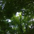 «День природы» в детском саду