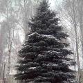 Мое стихотворение «Наша елка хороша…»