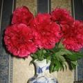 Цветы для души (фото)