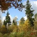 Осень в нашем парке.