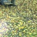 Занятие по аппликации в младшей группе «Падают листья».