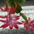 Немного о домашних растениях