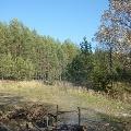 Я живу в краю Сосновском! (нижегородская область).