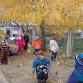 Красные, желтые листья по ветру вьются, летят
