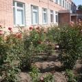 Цветы на территории ДОУ