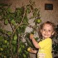 Зима— пора собирать урожай цитрусовых!!!