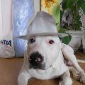 Посмотрите на собаку— модель!