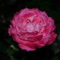 Стихотворение «Весна пришла!»