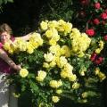 «Дарю всем розы!» (стихи о нашей виртуальной дружбе)