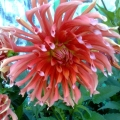 «Цветочный блюз на любой вкус». Фотоотчет из цветника моей группы.