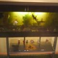 Конспект занятия. «Волшебный мир аквариума»