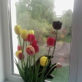 В садике садочке, растут мои цветочки