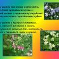 И в моём садочке расцвели цветочки! Фоторепортаж с садового участка.