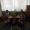 Занятие по экологии в средней группе