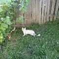 Забавный кот Деги.
