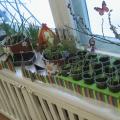 Наш огород на окне— огород Маши и Маши!