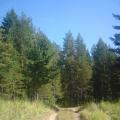 До чего же красива наша северная природа!