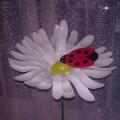 Мастер-класс: «У меня в садочке выросли цветочки»
