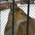 Зоопарк в г. Северск.