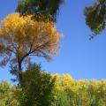 Осенняя пешая оздоровительная прогулка.