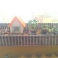 Огород на нашем окне