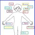 Дидактическая игра по валеологии «Строение человека»