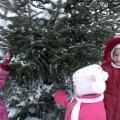 Тематический план работы по экологическому воспитанию (зима)