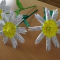 Цветы на благо Белая ромашка