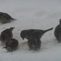 Наблюдения за зимующими птицами на прогулке в разновозрастной группе.