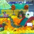 «Наш веселый дворик» из бархатцев!!!