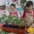 Особенности труда детей дошкольного возраста